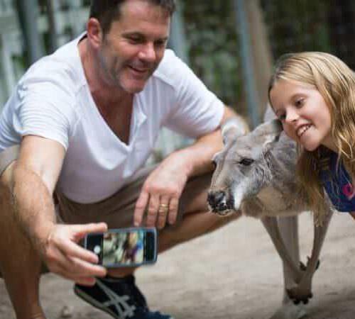 Australian red kangaroo Credit Jungle Island