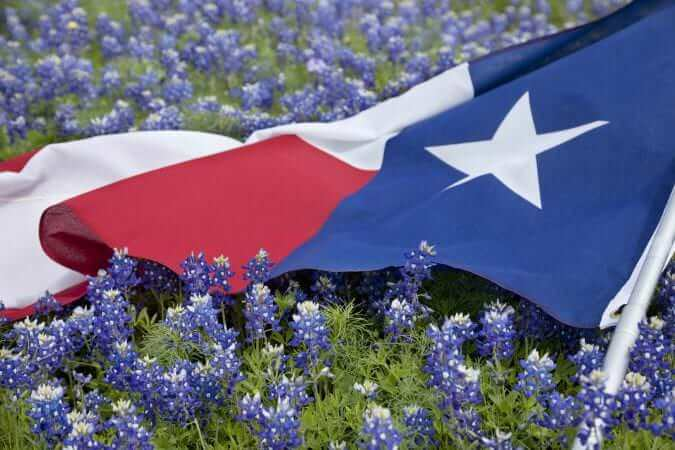 texas flag in field of bluebonnets PCBTDMM